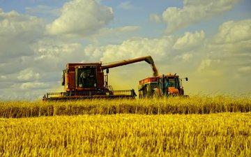 трава, пейзаж, поле, сено, пшеница, машины, fields, осен, сбор урожая