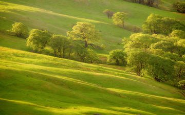 grass, trees, greens, slope, hill