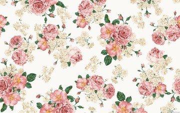 цветы, розы, шиповник, листочки, букет