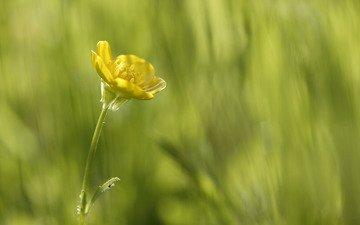 желтый, зелень, макро, цветок, красота в простом