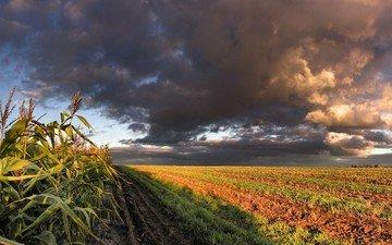 облака, поле, кукуруза