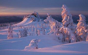 снег, природа, лес, закат, зима