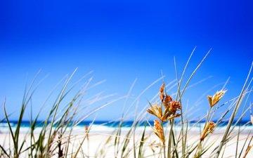трава, пляж, горизонт