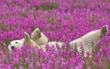 flowers, polar bear
