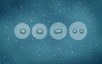 клетки, деление