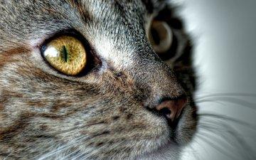 кот, мордочка, усы, шерсть, кошка, взгляд, мордашка