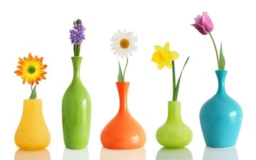 цветы, ромашка, тюльпан, нарцис