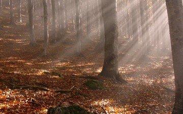деревья, лес, листья, лучи, ветки, стволы, осень, желтые опавшие листья