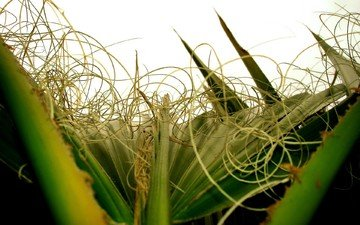 растения, листья, завитки, крупным планом