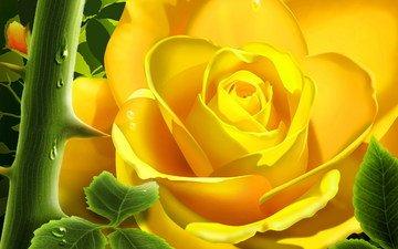 цветы, роза, сад, шипы, 3д