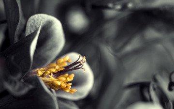 лепестки, пестик, тычинки, изящно