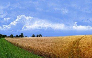 дорога, трава, поле