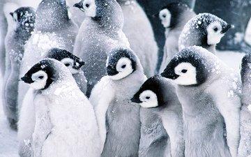 снег, пингвины, детские