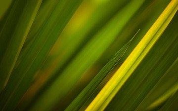 трава, текстуры, зелёный, green textures