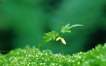 зелёный, листочки, растение