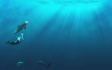 свет, дельфины, подводная