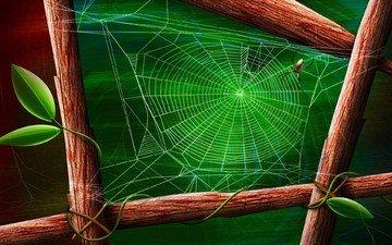 зелёный, лист, паук, паутина