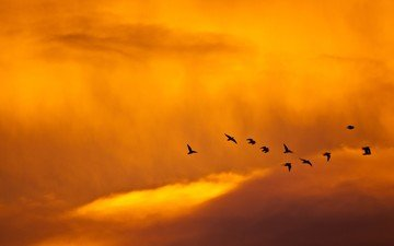 небо, минимализм, птицы
