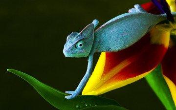 желтый, зелёный, синий, цветок, красный, ползет, хамелеон