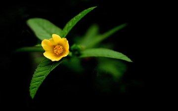 цветы, природа, желтый, обои, фото, flowers wallpapers