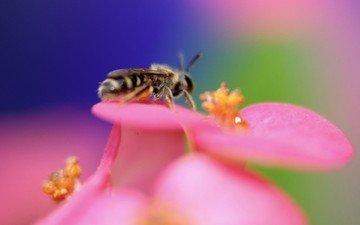 цветок, цвет, пчела