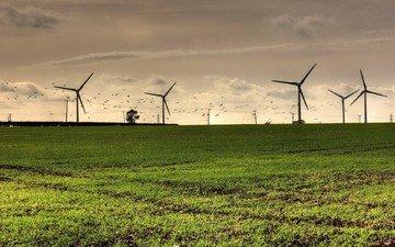 поле, птицы, ветряки, ветротурбины