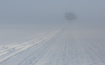 tree, winter, fog, trail