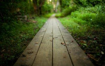 деревья, природа, лес, пейзаж, парк, дорожка, кусты, тропинка, доски, путь, древесина, на природе