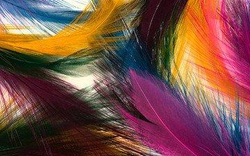 текстура, цвета, перья, яркие