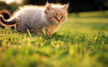 трава, лето, котенок