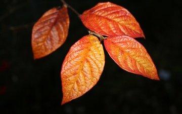 листы, жилки, стебель