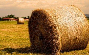 поле, сено, солома, тюк