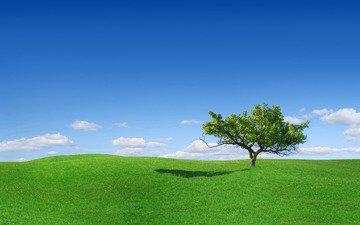 трава, дерево, поляна, одинокое