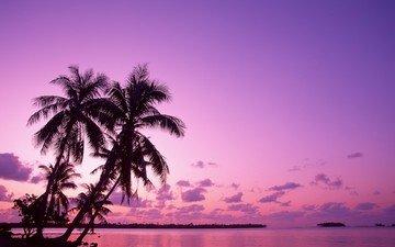восход, пальмы, отпуск