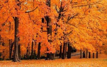 деревья, природа, желтый, обои, листья, фото, осень, осенние обои, леса, листопад, парки