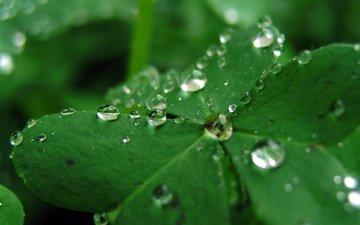 макро, роса, лист