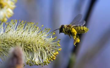 полет, цветок, пчела