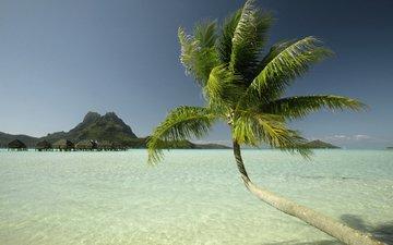море, дома, пальма, остров
