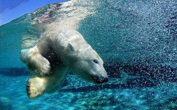 вода, медведь, пузыри, под водой, белый медведь, арктика