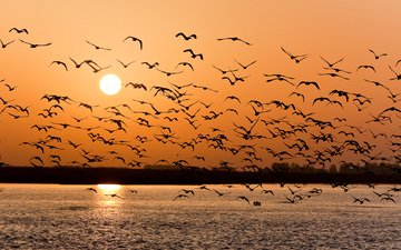 закат, чайки, волга
