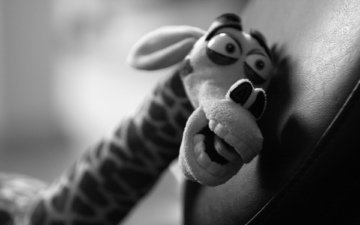 игрушка, жираф, мэлман