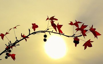 branch, the sun, leaves