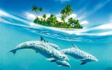 вода, остров, дельфины