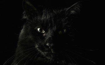 животные, кошаки, страх, чёрные