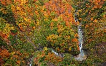 река, лес, ущелье, сверху