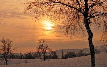 деревья, закат, зима