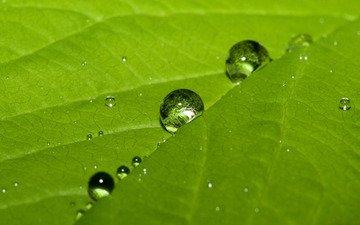 зелёный, роса, капля, лист
