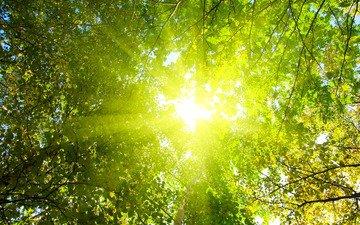 свет, деревья, солнце, природа, лес, лучи, парк, утро