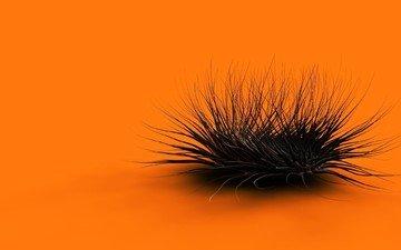 оранжевый, куст