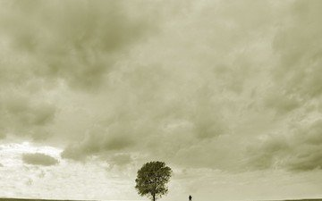 дерево, грусть, человек